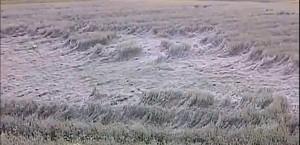 Traces céréalières à Ste-Brigide d'Iberville [Résolu]